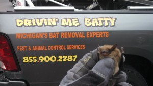 bat exclusion services