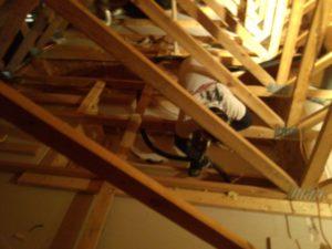 attic vacuum bat guano